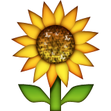 Sunflower Emoji (Apple/iOS Version)