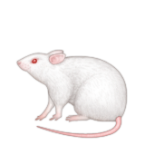 Mouse Emoji (Apple/iOS Version)