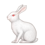 Rabbit Emoji (Apple/iOS Version)