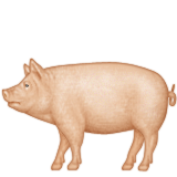 Pig Emoji (Apple/iOS Version)